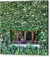 Green Ivy Window  Canvas Print