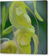 Green Lady Slipper Orchid Canvas Print