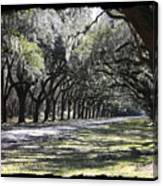 Green Lane With Live Oaks - Black Framing Canvas Print