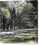 Green Lane With Live Oaks Canvas Print