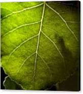 Green Leaf Detail Canvas Print