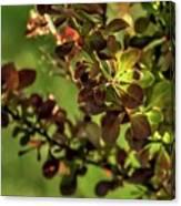 Green Leaf Spotlight Canvas Print