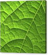 Green Leaf Structure Canvas Print