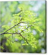 Green Leaves In The Forest Canvas Print