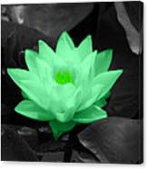 Green Lily Blossom Canvas Print