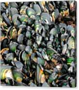 Green Lipped Muscles Canvas Print