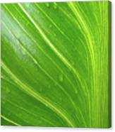 Green Living Canvas Print