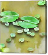 Green Lotus Leaf In The Lake Canvas Print