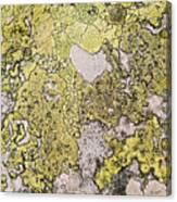 Green Moss On Rock Pattern Canvas Print