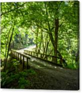Green Nature Bridge Canvas Print