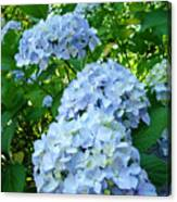 Green Nature Landscape Art Prints Blue Hydrangeas Flowers Canvas Print