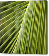 Green Palm Leaf Canvas Print