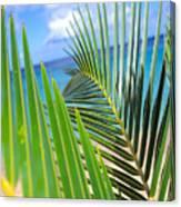 Green Palm Leaves Canvas Print
