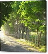 Green Path Canvas Print