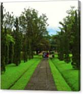 Green Pathway  Canvas Print