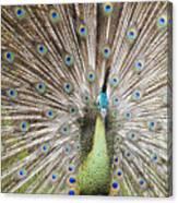 Green Peacock Canvas Print
