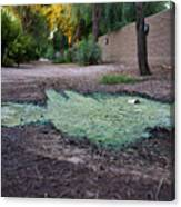 Green Puddle Canvas Print