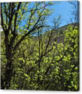 Green Reach Canvas Print