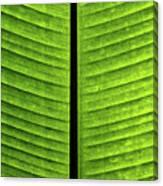 Green Ribs Canvas Print