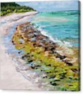 Green Sandbar Canvas Print