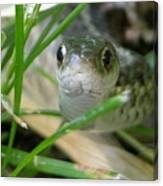 Green Snake Canvas Print