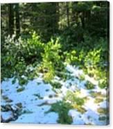 Green Snow Canvas Print