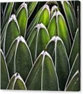 Green Spines Canvas Print