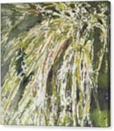 Green Reeds Canvas Print