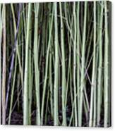 Green Sticks Canvas Print