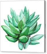 Green Succulent  Canvas Print