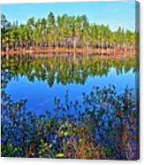 Green Swamp In December Canvas Print