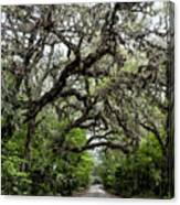 Green Swamp Oak Bower Canvas Print