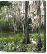 Green Swamp Canvas Print