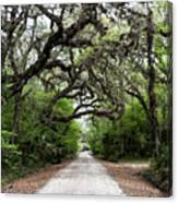 Green Swamp Tunnel Canvas Print