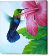 Green-throated Carib And Pink Hibiscus Canvas Print