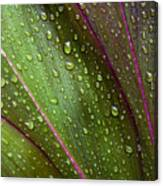 Green Ti Leaves Canvas Print