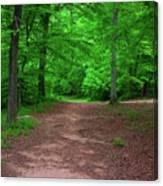 Green Trail Canvas Print
