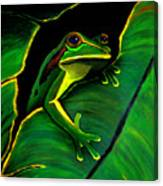 Green Tree Frog And Leaf Canvas Print