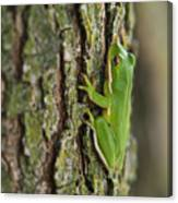 Green Tree Frog Thinking Canvas Print