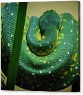 Green Tree Python Canvas Print
