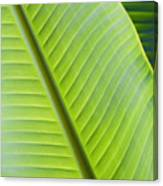 Green Tropical Leaves Canvas Print