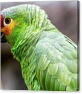 Green Tropical Parrot, Side View. Canvas Print