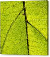 Green Veins Canvas Print