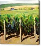 Green Vineyards Of Napa Canvas Print