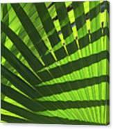 Green Weaver Canvas Print