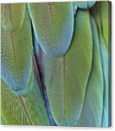 Green-winged Macaw #4 Canvas Print