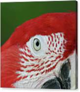 Green-winged Macaw Close Up Canvas Print