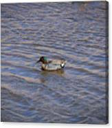 Green-winged Teal 5 Canvas Print