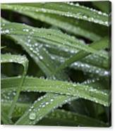 Green With Rain Drops Canvas Print