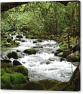Greenbrier River Scene 2 Canvas Print